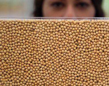 Cât de sănătoasă este, de fapt, soia? Adevărul pe care medicii evită să îl spună