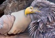 VIDEO | Vultur rar, împușcat de braconieri
