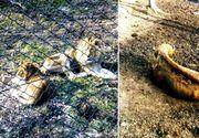 Imagini șocante de la Grădina Zoologică din Reșița: animale ținute în condiții greu de imaginat