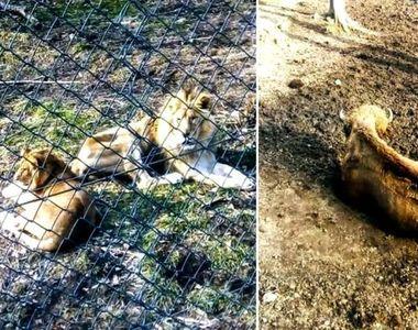 Imagini șocante de la Grădina Zoologică din Reșița: animale ținute în condiții greu de...
