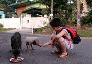 El este copilul care și-a folosit toate economiile să hrănească animalele de pe stradă