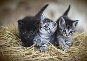 Timișoara: Un tânăr adopta pisici apoi le omora cu bestialitate