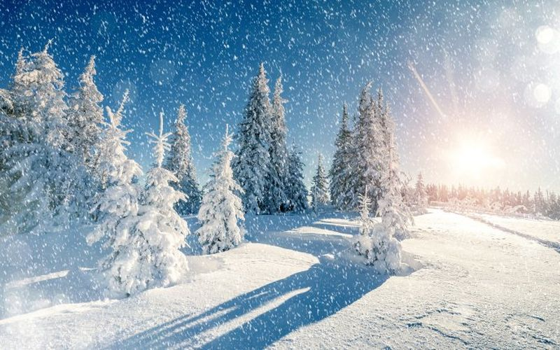 Ninge in Romania 2020 - Zapada in România 2020