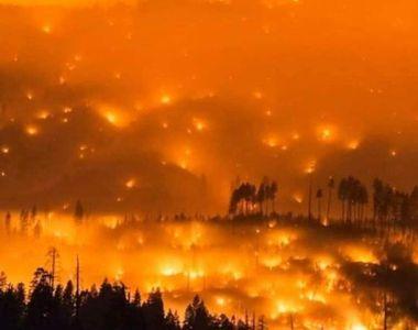 """Simona Halep, despre incendiile de vegetaţie din Australia: """"Am donat mai mult decât am..."""