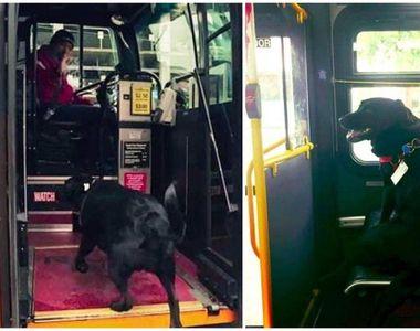 Ea este cățelușa care merge singură cu autobuzul până la locul de joacă pentru câini