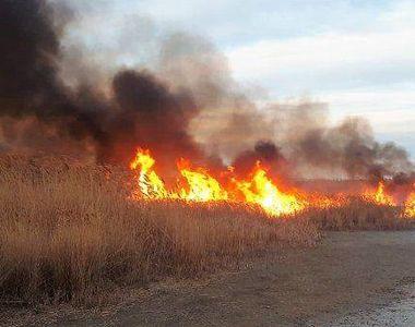 Delta Dunării, în pericol. Un incendiu de vegetație a avut loc