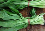 Leacul primăverii: Această plantă ține la distanță toți VIRUȘII!