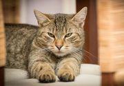 Coronavirus la pisici. Ce este și cum se tratează