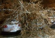 VIDEO | Vreme București. Iarna s-a dezlănțuit în Capitală. Mașini avariate și acoperișuri smulse
