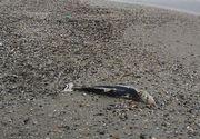 Apariție șocantă pe malul Mării Negre. Oamenii au înlemnit când au aflat ce este. Imagini incredibile