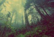 Parlamentarii republicani americani vor plantarea a 1.000 de miliarde de arbori în Statele Unite, pentru combaterea încălzirii globale