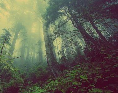 Parlamentarii republicani americani vor plantarea a 1.000 de miliarde de arbori în...