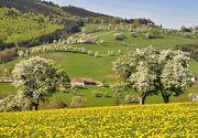 Când vine primăvara în România 2020? Anunț de ultimă oră de la meteo