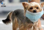 VIDEO | Speriați de coronavirus, chinezii le pun măști de protecție animalelor. Imagini virale