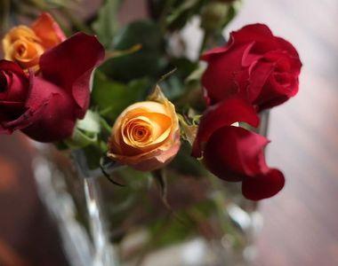 De Dragobete, ofera-i iubitei sau sotiei tale cei mai frumosi trandafiri criogenati!