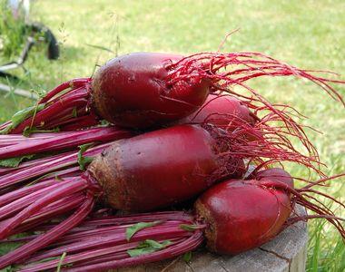 Sfecla roșie: cum se consumă? Cât de bună este dacă o consumi crudă sau coaptă