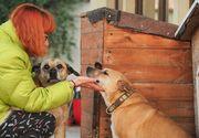 """Câinii care au vegheat la căpătâiul Cristinei Ţopescu sunt traumatizaţi! """"Cățelușele Bonnie și Sissi fac terapie de reintegrare după șocul suferit la moartea vedetei"""" FOTO"""