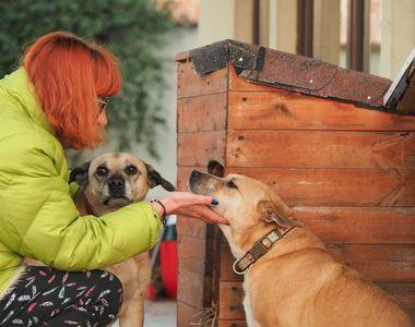 """Câinii care au vegheat la căpătâiul Cristinei Ţopescu sunt traumatizaţi! """"Cățelușele..."""