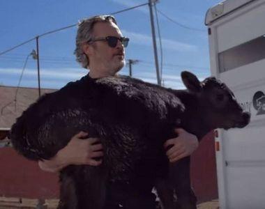 Actorul Joaquin Phoenix (Joker) a salvat o vacă şi un viţel înainte de a fi duşi la abator