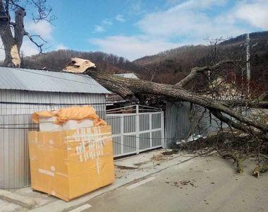 O femeie de 57 de ani din Neamț a fost rănită de crengile unui copac doborât de vânt