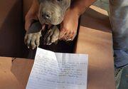 Gestul impresionant făcut de un băiat pentru câinele său: După ce l-a salvat de la bătaie, părăsindu-l, i-a lăsat o jucărie pentru a nu-l uita toată viața