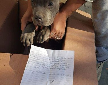 Gestul impresionant făcut de un băiat pentru câinele său: După ce l-a salvat de la...