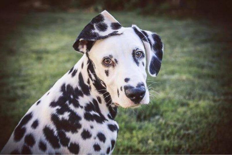 cel mai frumos câine din lume