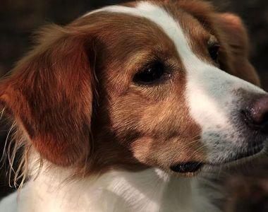Un cuplu din California şi-a clonat câinele decedat