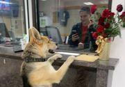 El este câinele care s-a predat singur la secția de poliție