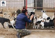 Legătura incredibilă dintre Alexandru Cumpănașu și asociația care are grijă de câinii lui Dincă