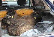 Ce au descoperit polițiștii spanioli în portbagajul unui român. Bărbatul a fost arestat pe loc