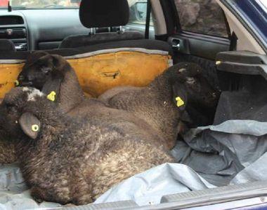 Ce au descoperit polițiștii spanioli în portbagajul unui român. Bărbatul a fost arestat...
