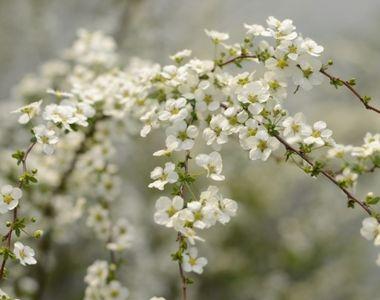 Echinocțiul de primăvară. Când se schimbă ora