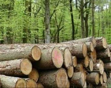 Parlamentarii USR cer stoparea tăierile de păduri în perioada stării de urgenţă