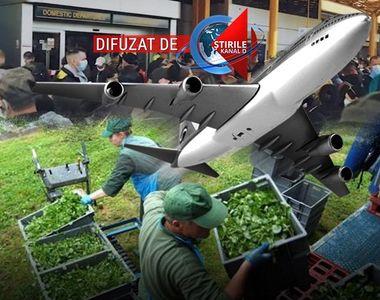 VIDEO| Românii pleacă din nou cu miile în afara graniţelor. A început munca sezonieră