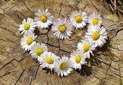 Mesaje Florii. Cele mai frumoase mesaje pe care să le trimiți celor care își sărbătoresc ziua numelui