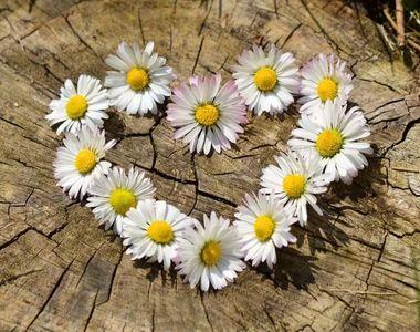 Mesaje Florii. Cele mai frumoase mesaje pe care să le trimiți celor care își...