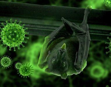 6 tipuri noi de coronavirus! Descoperirea care ar putea schimbă tot