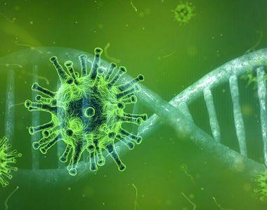 """Cercetători din SUA şi India: """"Coronavirusul se refugiază în testicule, din acest motiv..."""