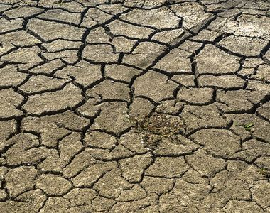 Ministrul Agriculturii spune că sunt afectate de secetă 2,9 milioane de hectare din...