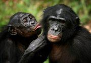 Vaccin anti-coronavirus: Ce rezultate au testele efectuate pe maimuţe?