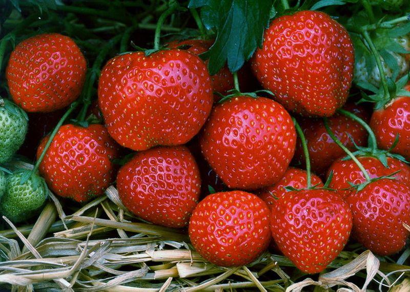 Căpșuni românești