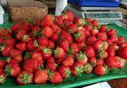 Căpșuni românești. Cum le recunoști. Nu te lăsa înșelat la piață!