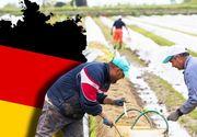 VIDEO| Sclavi pe pământul nemților. Strigătul disperat al muncitorilor români