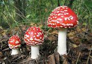 Familie otrăvită cu ciuperci. Două femei au murit