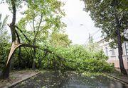 Ialomiţa: Copaci şi stâlpi de electricitate doborâţi de furtună