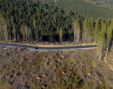 Senatul a adoptat propunerea USR privind înfiinţarea DNA-ului Pădurilor