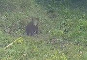 Pui de urs, scos dintr-o fântână din Brașov cu ajutorul jandarmilor