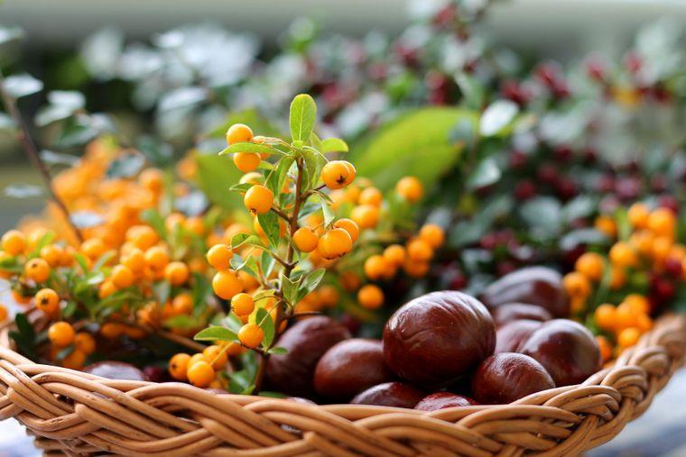Catina - proprietăți miraculoase și trucuri de creștere
