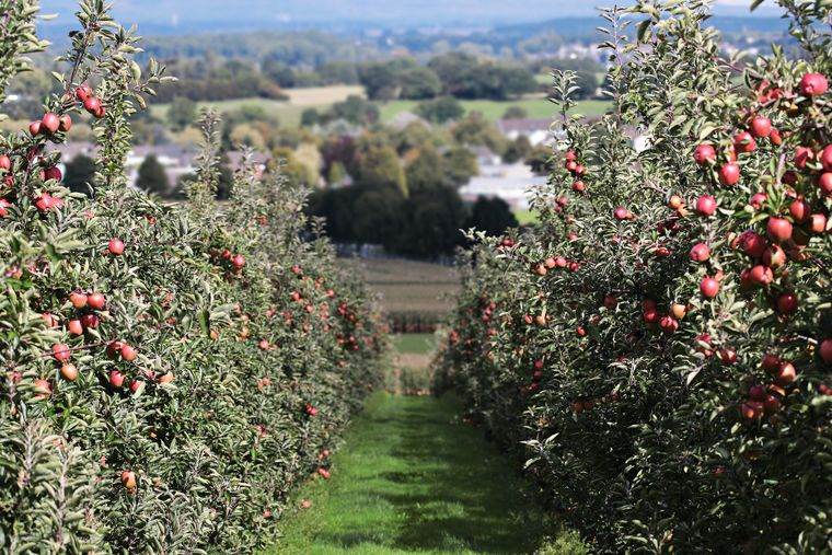 Când se plantează pomii fructiferi?  Află totul aici!